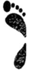 Hol voettype